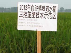 水稻三控施肥技术示范基地